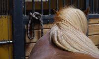 Par döms för djurplågeri av hästar