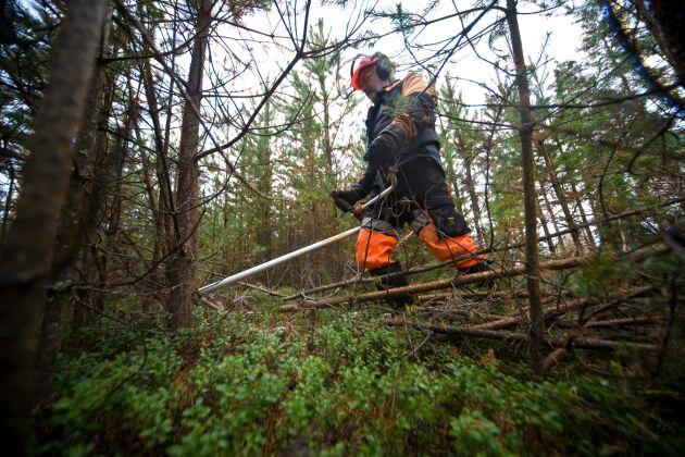 De som säljer till de kooperativa företagen kommer förr eller senare att få del av skogens förädlingsvärde, menar Knut Persson.