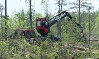 Avverkning av höga naturvärden problematiskt för FSC