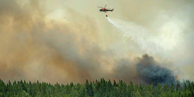 Skogsbolag riskerar mångmiljonböter