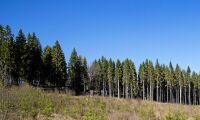 Sveaskog förbättrade resultatet