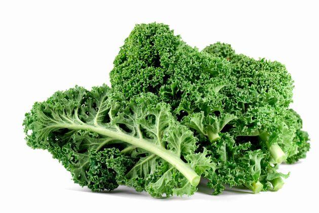 Grönkål är supergrönsak som kan skördas hela vintern.