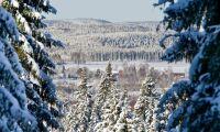 Svart på vitt om skogens kolsänka