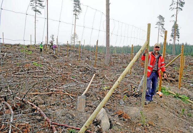 Rutorna som sätts upp i Östergötland ska sitta uppe i minst tio år, berättar Niklas Gustavsson, inspektor och viltinspektör för Södra Skogsägarna.