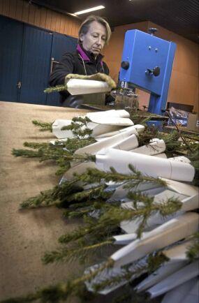 Marie Bornheim putsar rottrådar på plantor med färdigmonterade skydd.