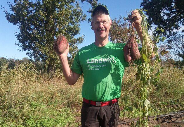Anders Olsson, som driver Bond-Gården i Olsäng, är först av alla i Blekinge med att odla sötpotatis. Första skörden blev efter en del umbäranden lyckad, med potatisar som vägde uppåt ett kilo.