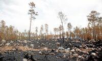 Nu kan skogsägarna se brandskadorna
