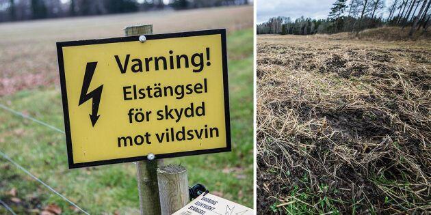 LRF: Jaktlagstiftningen måste omarbetas