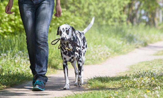 Att gå ut med hunden får både dig och vovven att må bättre.