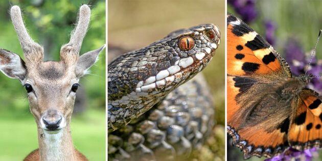 Hörseln är livsviktig för djuren – om än på olika sätt
