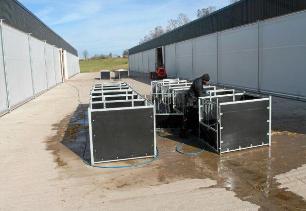 När spädkalvarna är fyra veckor könsindelas de och flyttas till gruppboxar. När enkelboxarna tas ut och renspolas på plattan växlar man från dagvattenavlopp till avlopp till flytgödselbrunnen.