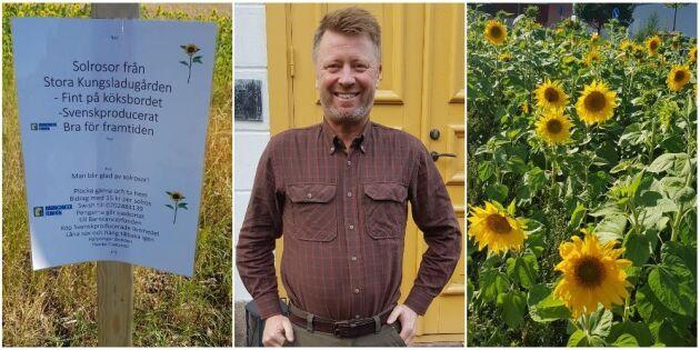 Hans solrosor blev bingo för Barncancerfonden