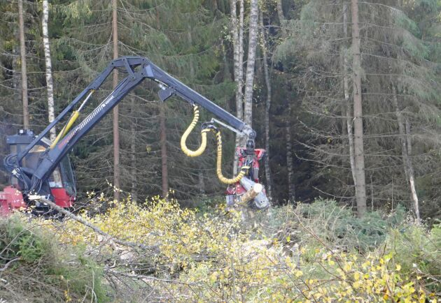 Avverkning i Kronoby i Österbotten.