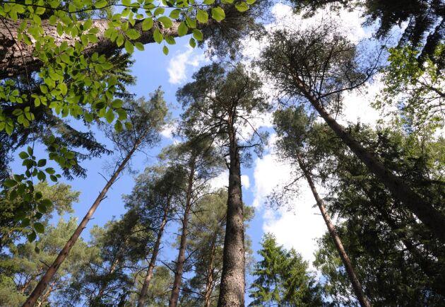 3D-skrivare skapar nya värden för konsumenten, och kan ge skogsägare bättre betalt. (Arkivbild på skog.)