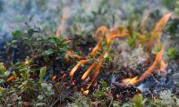 Stor risk för skogsbränder
