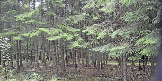 Kronvilt gillar inte stamkvistad skog