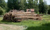 Skogsindustrin pressad av torkan