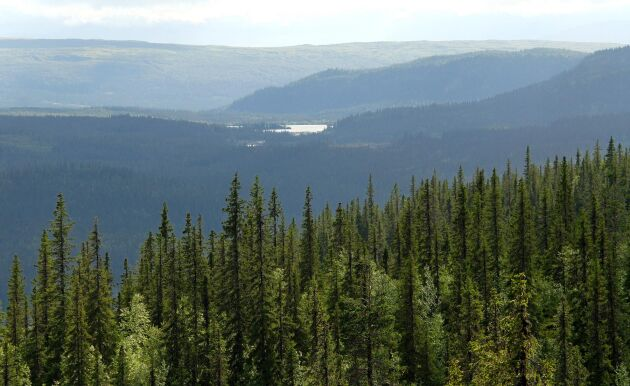 Skogsstyrelsen överklagar de fjällnära domarna till Mark- och miljööverdomstolen.