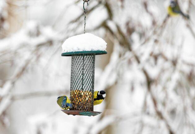 Intresset för fåglar är stort, uppåt en halv miljon svenskar matar fåglar varje vinter.