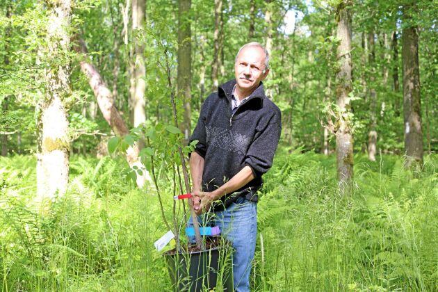 Jens Peter Skovsgaard propagerar för tyskoxel, valnöt och sykomorlönn.