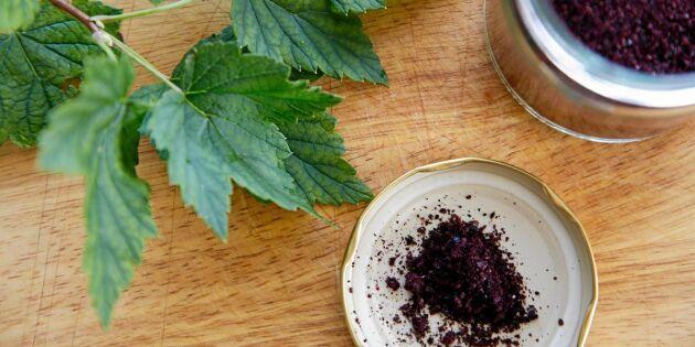 Gör ditt eget svartvinbärspulver – hälsokraft på burk