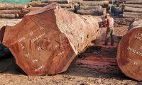 EU-kommissionen vill göra mer för att skydda skog