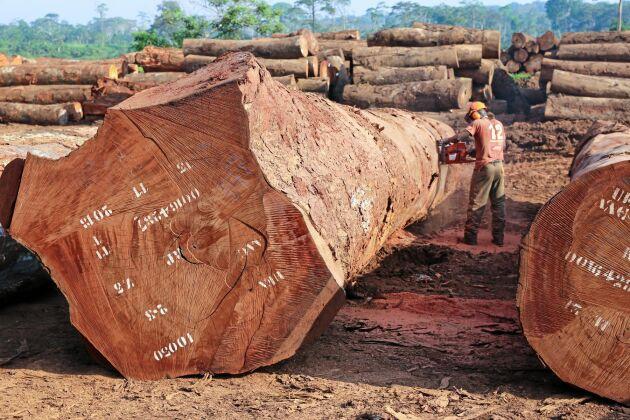 EU-kommissionen anser att det bör göras mer för att säkra att konsumtion i EU inte leder till avskogning i andra delar av världen, som i Kamerun där den här bilden är tagen.