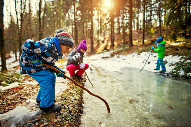 Äventyr, lek, klättring, blommor och djur. Det är viktiga saker för barnen när det gäller skog.