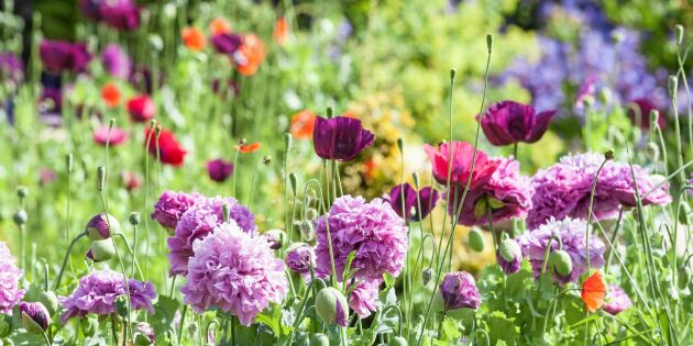 Blommor och grönsaker att så i höst och vinter