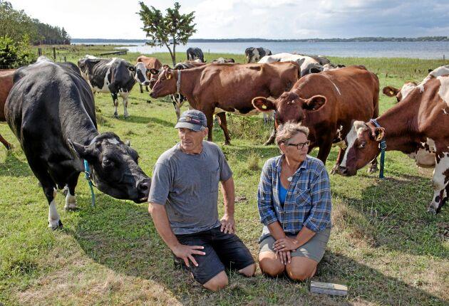 De sista mjölkbönderna på Fårö. Ronny och Malin Kellström sitter nere på strandängarna vid Fårösund. Nu upphör mjölkproduktionen på Broa Gård, men nöt- och lammproduktion samt potatisodling fortätter.
