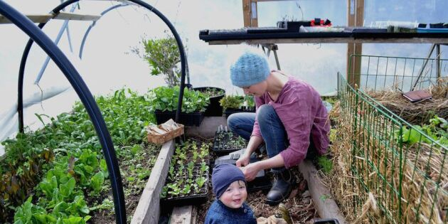 Sara Bäckmo: Så får jag en jätteskörd av majs!