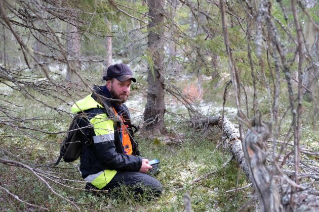 Magnus Kristoffersson på Skogsstyrelsen i Östersund genomför en nyckelbiotopsinventering.