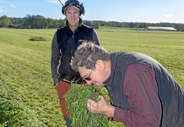 Efter en grovfoderanalys framkom att vallarna hos Tore och Per Larsson led brist på svavel. Vårgödslingen med magnesiumsulfat har därför visat sig vara betydelsefull.