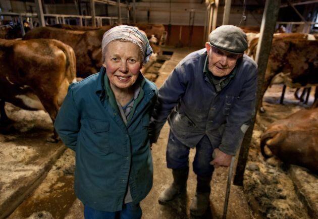 """Syskonen Sonja och Göstas kärlek till sina rödvita mjölkkor skildras i dokumentären """"Korna i Djurarpsdalen""""."""