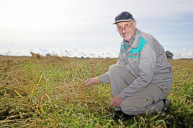 Stefan Frank visar upp ett av fälten där han odlar kanariefrön.