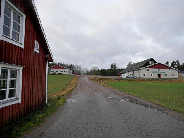 Syns från vägen. I en ombyggd ladugård finns både kontor, gårdsbutik och förpackningslina.