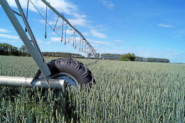 Bevattningsanläggningen hos Calle Larsson är av typen centerpivot och täcker 20 hektar.