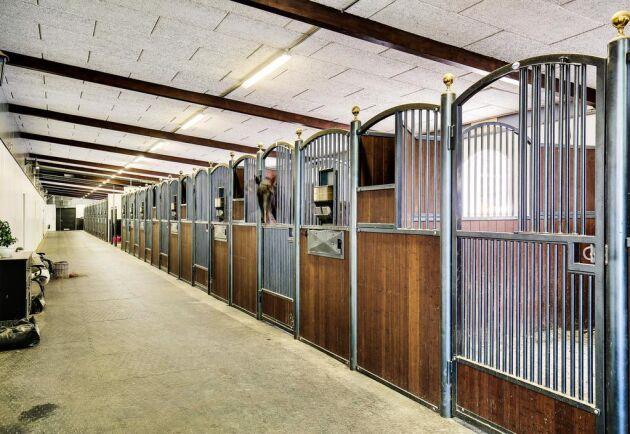 skrittband häst till salu