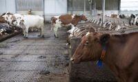 Takras i Ljusdal: 41 döda kor
