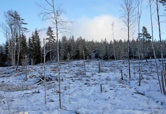 Om samma krav ställdes på stora skogsägare som på små, skulle sannolikt mycket stora naturvärden bevaras, skriver debattören.