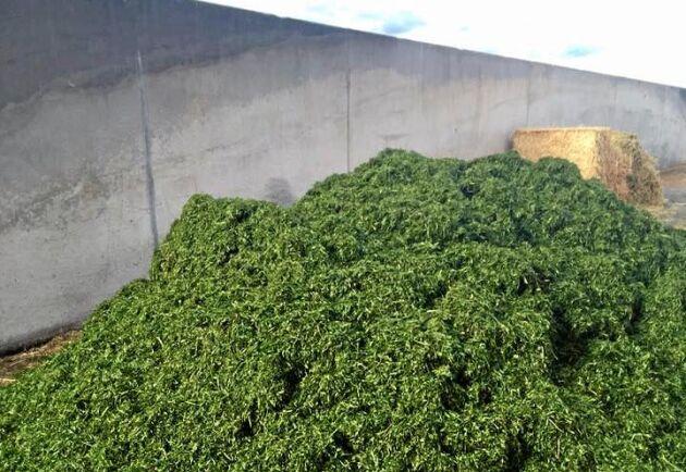 Nu har de hackat gräs och gjort ensilage i hagel och snö, parallellt med vårbruket.