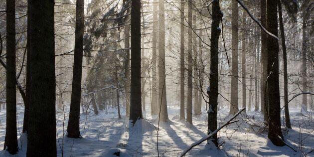 Domstolskritik mot polsk skogsavverkning