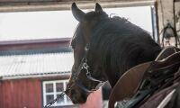 Vill ha krispaket till hästföretag
