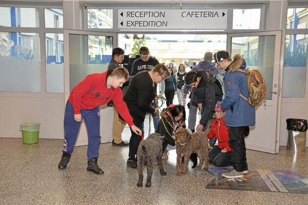 Populära. När Eva Jansson och hundarna promenerar i korridoren bidrar de till bra stämning. Även den tuffaste ungdomen sjunker på knä, klappar och jollrar.