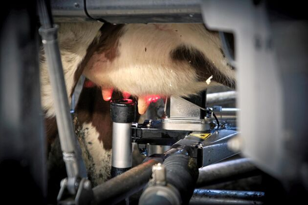 Delaval är ett av företagen som deltar med sitt forskningsprojekt. Doktoranden ska skapa algoritmer för att upptäcka indikationer på mastit i sensordata från mjölkningsrobotar. Den ska också kunna matcha symptomen med förslag på behandling. Foto: Lisa Rogert