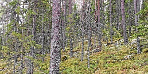 """""""Skogsstyrelsens instruktioner för nyckelbiotopsinventering är olagliga"""""""