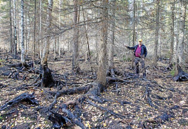 Det var här vid ytterkanten mot bäcken som de fyra skogsägarna kämpade mot elden för att den inte skulle sprida sig över bäcken.