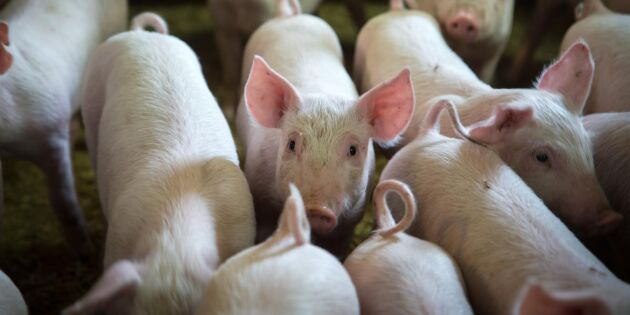 Bönder fängslade efter spermasmuggling i schampoflaskor
