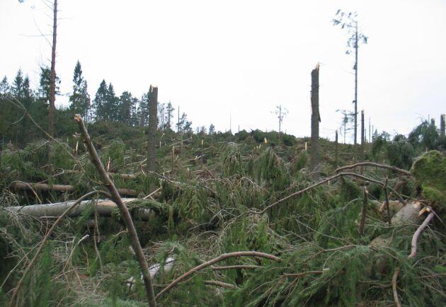 Stormarna befaras bli fler i ett förändrat klimat.