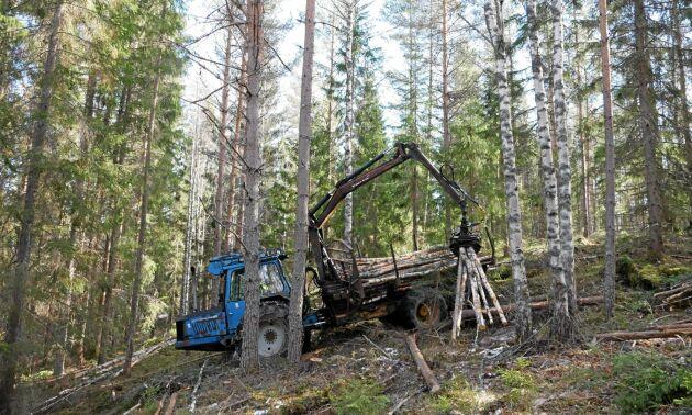 Gallringen är gjord med en Rottne 2004 och Erik Brate börjar med att plocka ut lövet.